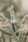 Orange-County-Wedding-Photographer-Joshua-Tree-Engagement-Brianna-Caster-and-Co-Photographers-40